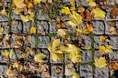 Herbstahornblätter auf den Pflastersteinen Lizenzfreies Stockfoto