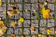 Herbstahornblätter auf den Pflastersteinen Stockbild