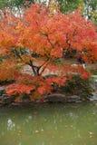 Herbstahornblätter neben dem Wasser Anlage, im Freien lizenzfreie stockfotografie