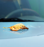 Herbstahornblatt auf Autofenster Stockbilder