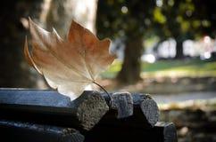 Herbstahornblatt auf einer Bank Lizenzfreie Stockfotos