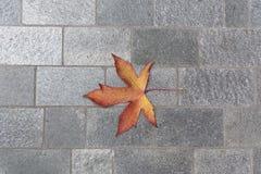 Herbstahornblatt auf einer Pflasterung lizenzfreie stockfotos