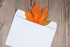 Herbstahornblatt im Großen Umschlag Lizenzfreie Stockbilder