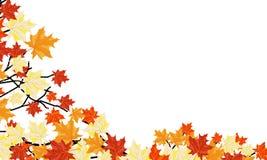 Herbstahornhintergrund Lizenzfreies Stockbild