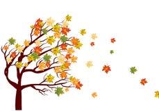 Herbstahornholz Lizenzfreies Stockbild