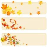 Herbstahornholz Stockfoto