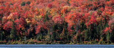 Herbstalgonquin-Ufer Stockfotografie
