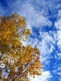 Herbstanblick Stockbild