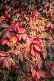 Herbstanlage hecke lizenzfreie stockfotografie