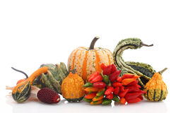 Herbstanordnung Stockfotografie