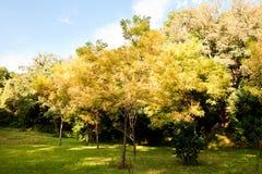 Herbstansicht Lizenzfreie Stockfotos