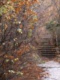 Herbstansicht Lizenzfreie Stockbilder