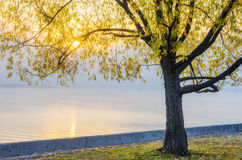 Herbstansicht des Dammes des Dnieper-Flusses Stockbild