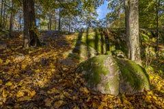 Herbstansicht von moosigen Steinen, Bäume und trocknen Blätter Lizenzfreies Stockfoto