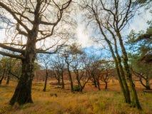 Herbstansichten an Dovestone-Reservoir lizenzfreie stockfotos
