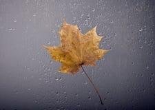 Herbstansichten durch das Fenster Stockfoto