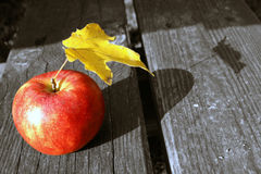 Herbstapfel Stockfoto