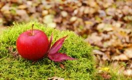 Herbstapfel Stockbild