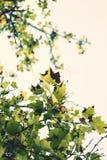Herbstaroma Lizenzfreies Stockbild