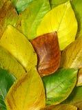 Herbstaufbau Lizenzfreie Stockbilder