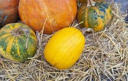 Herbstaufbau von den verschiedenen Kürbisen Stockfoto