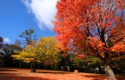 Herbstbäume stockfoto