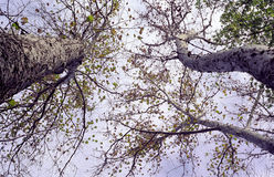 Herbstbäume Lizenzfreie Stockfotografie