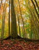 Herbstbäume stockbild