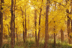 Herbstbäume Lizenzfreies Stockbild