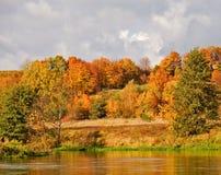 Herbstbäume Stockfotografie