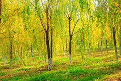 Herbstbäume Lizenzfreies Stockfoto