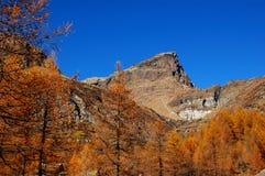 Herbstbäume auf Berg Stockbilder