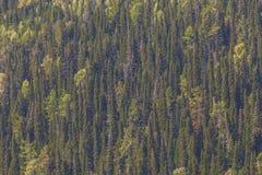 Herbstbäume auf einem steilen Berghang Stockfoto