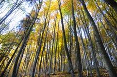 HerbstBäume des Waldes mit Sonnenlicht HerbstBaum- des Waldesfoto Sonnenlicht im Buchenbaum-Gebirgswaldherbst-Waldhintergrund stockbilder