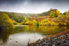 Herbstbäume durch den Teich Lizenzfreie Stockfotos