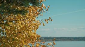 Herbstb?ume in einem Gelb-, Orange und Rotenwald an einem sonnigen Tag durch das Meer Herbstfarben und -laub stock footage