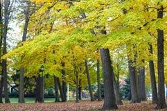 Herbstbäume in einem Park Lizenzfreie Stockfotos