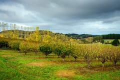 Herbstbäume im Garten Stockfoto