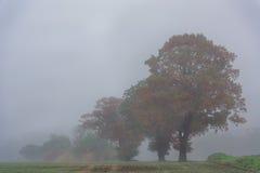 Herbstbäume im Nebel Lizenzfreie Stockfotos