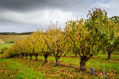 Herbstbäume im Obstgarten Lizenzfreies Stockbild