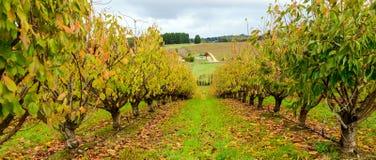 Herbstbäume im Obstgarten Lizenzfreie Stockfotos