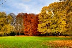 Herbstbäume im Park stockfotografie