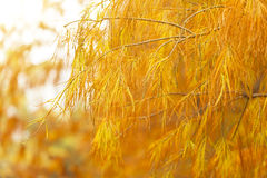 Herbstbäume im Wald lizenzfreies stockfoto
