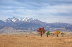 Herbstbäume nähern sich Bergen Stockbild
