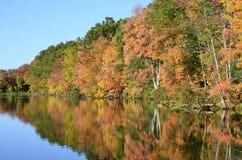 Herbstbäume nahe Teich mit Stockenten, Kanada-Gänse auf Wasserreflexion Stockbild