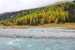 Herbstbäume neben einem Fluss Stockfotografie