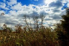 Herbstbäume ohne Blätter, bloße Baumaste die Eiche gegen den Himmel Stockfotos