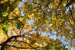 Herbstbäume und blauer Himmel lizenzfreie stockfotografie