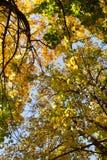 Herbstbäume und blauer Himmel stockbilder
