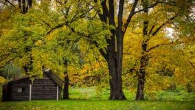 Herbstbäume und ein Holzschuppen im russischen Dorf Lizenzfreies Stockfoto
